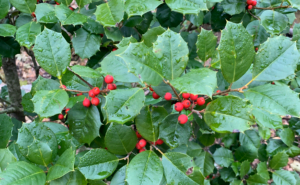 Holly on the Way
